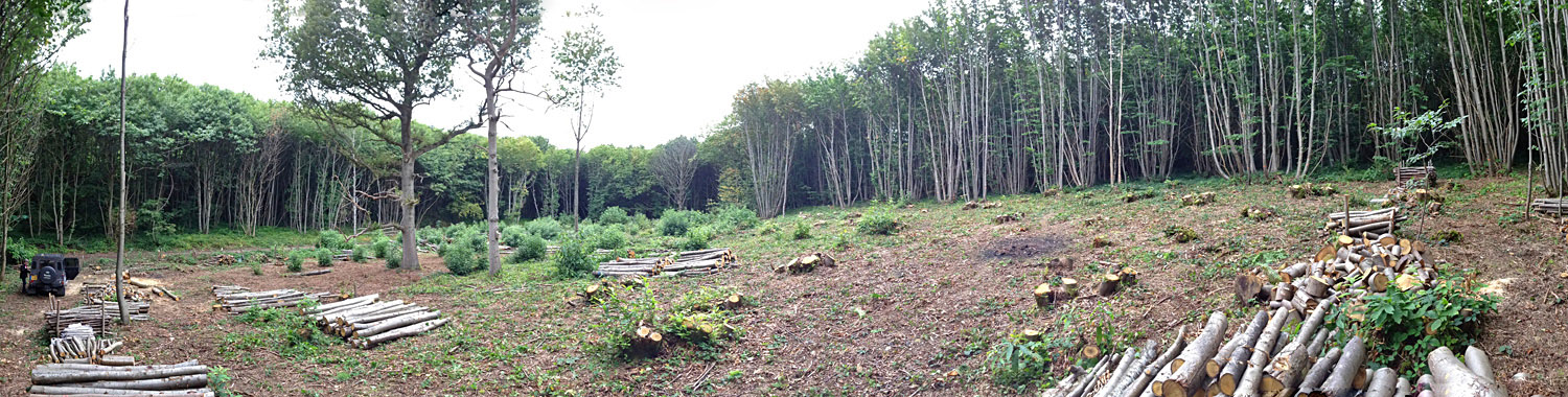 Clearing of chestnut coppice